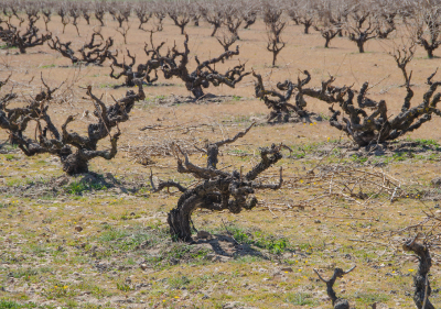 vendvino-distribucion-vinos-singulares